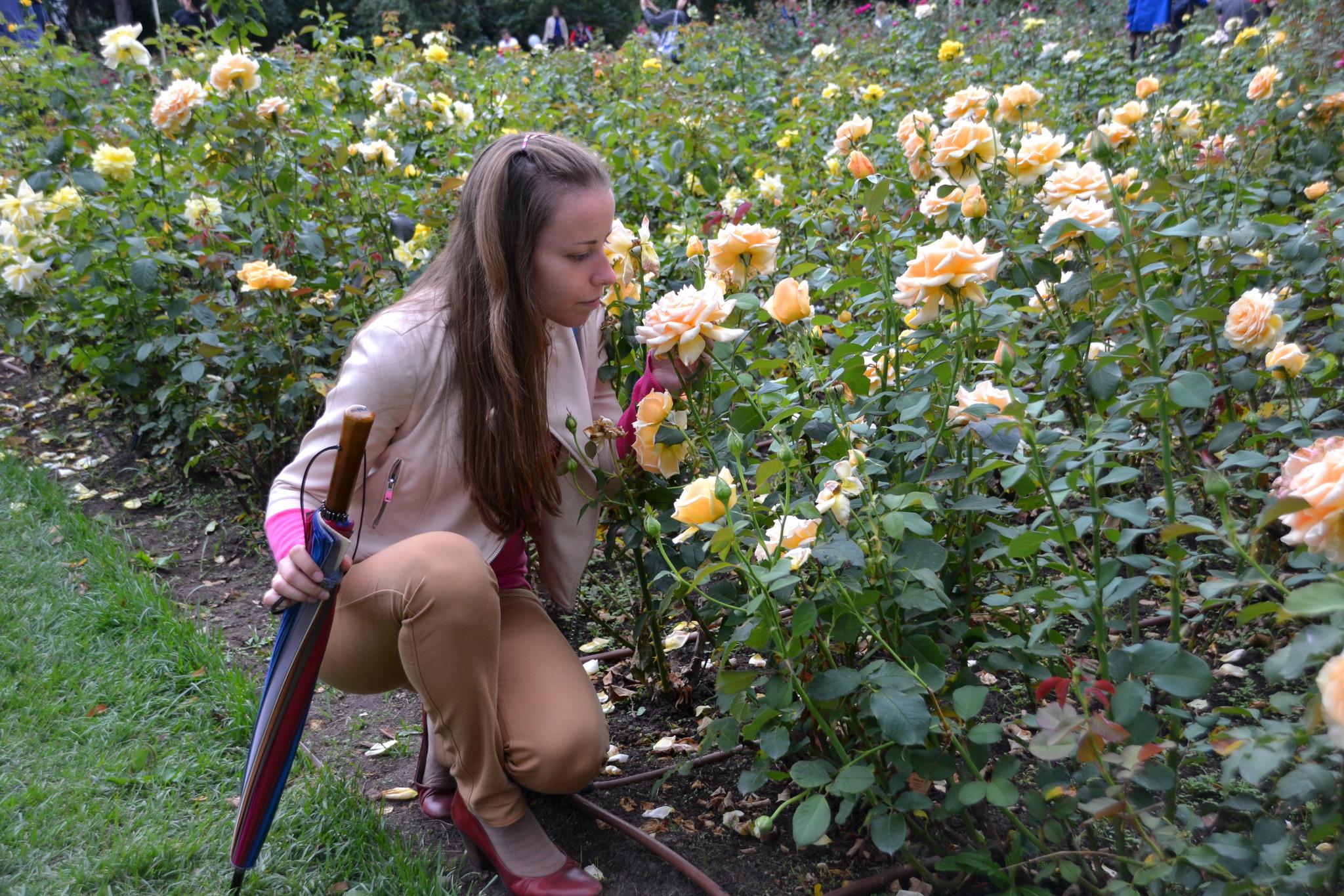 23. Чайные розы с замечательным запахом.